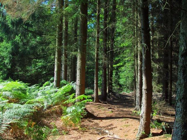 Waldpfade