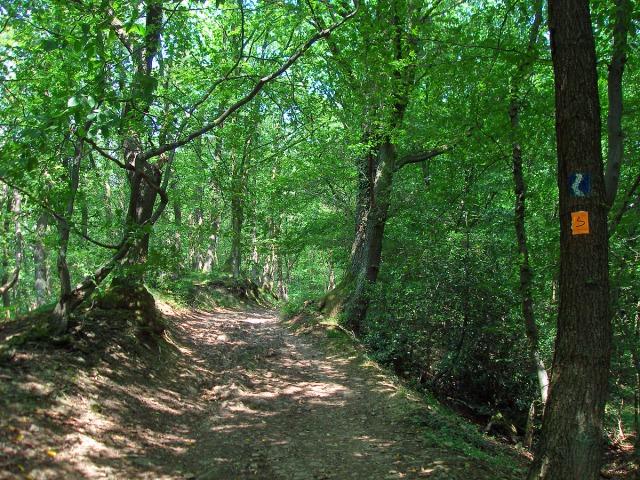 Rheinsteig und Bergischer Weg