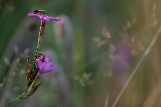 das letzte Licht für ein Blütenbild