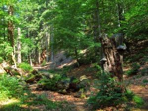 Am Totholz vorbei
