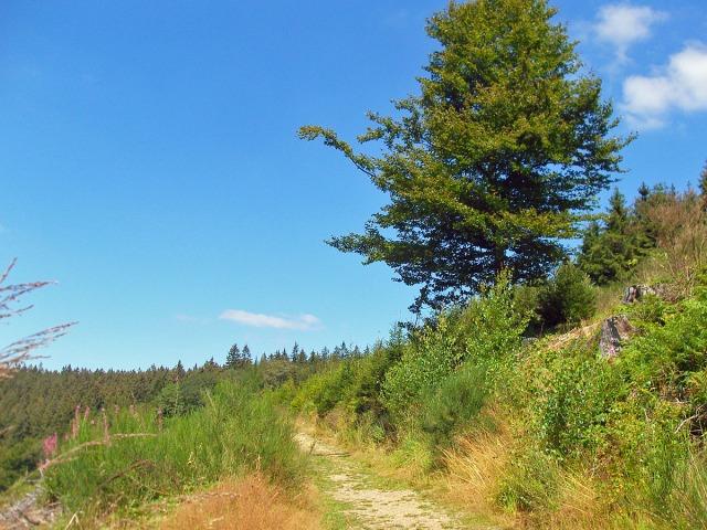 im offenen Gelände bietet sich der Blick ins Tal