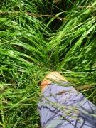 hohes weiches Gras