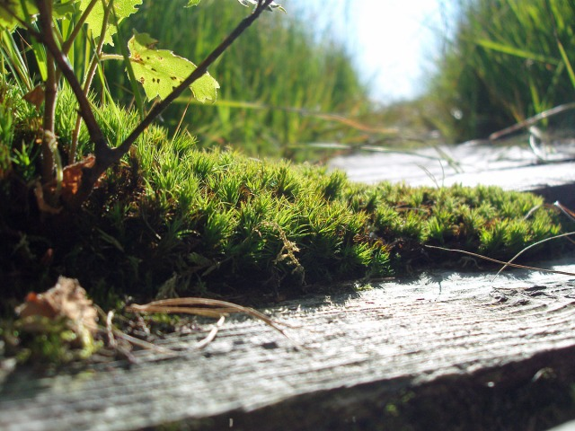 VennSteg-Impressionen