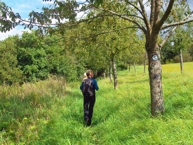 Wiesenweg zwischen Obstbäumen