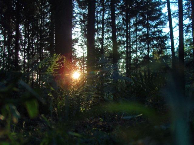 Farn - eingefangen mit dem letzten Licht