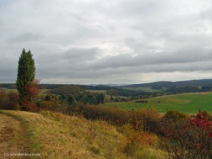 Heidegebiet in Niederehe