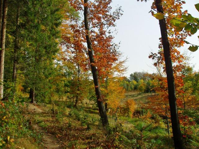 Venn-Feeling im Herbst