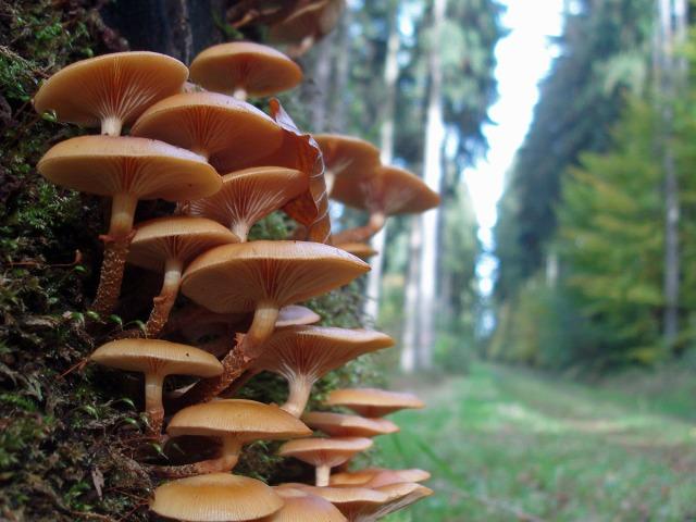 Pilze in Hülle und Fülle