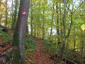 Ob schnell oder langsam - der Holzweg ist ein Erlebnis