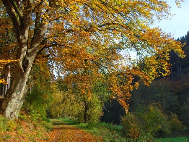 Goldenes Laub an den Bäumen