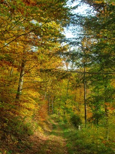 Goldener Herbst im Naturpark Südeifel