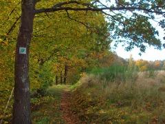 Wiesenpfade oberhalb von Ferschweiler