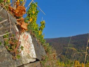 Der Rotweinwanderweg im Herbst