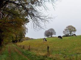 die Kühe haben auch keine Lust