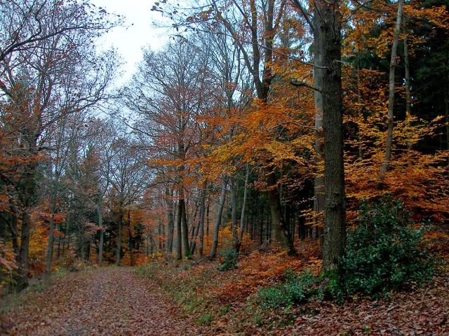 Herrlich bunter Herbstwald - auch ohne Sonne