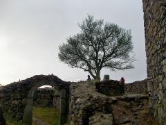 Löwenburg Ruine