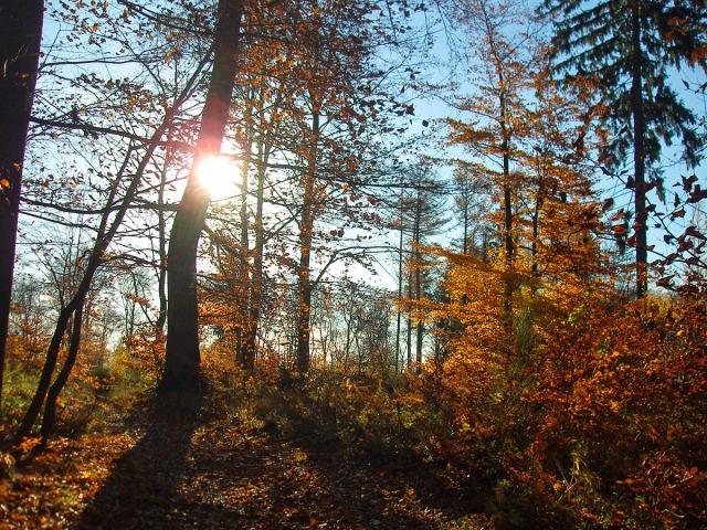 Herrliche Herbstsonne