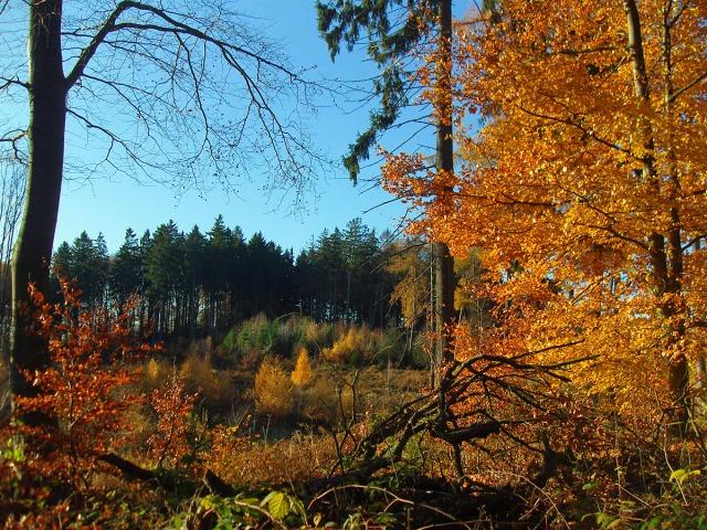 Siebengebirge Teil 2