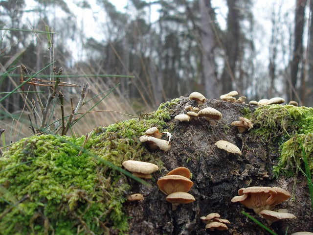 Pilze, Moos und Gräser entlang der Strecke