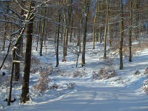 Waldabschnitt mit reichlich Schnee