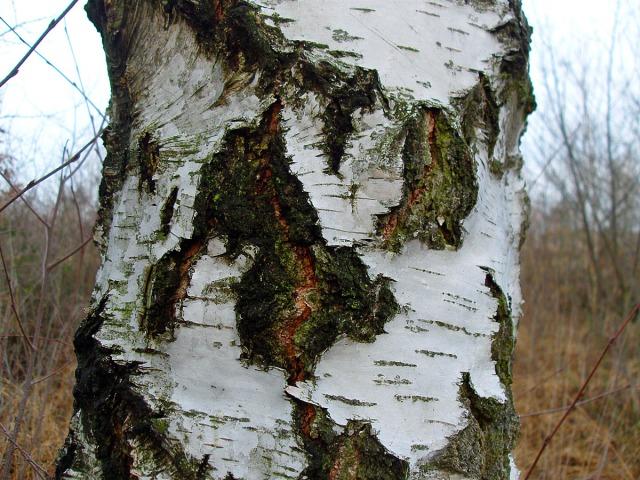 Borkenstruktur - Eine Mischung aus glatt und rau