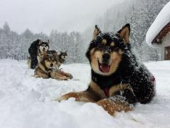 Zufriedene Hunde