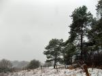 Kiefern, Wacholder & Schnee