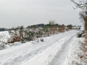offene Landschaft
