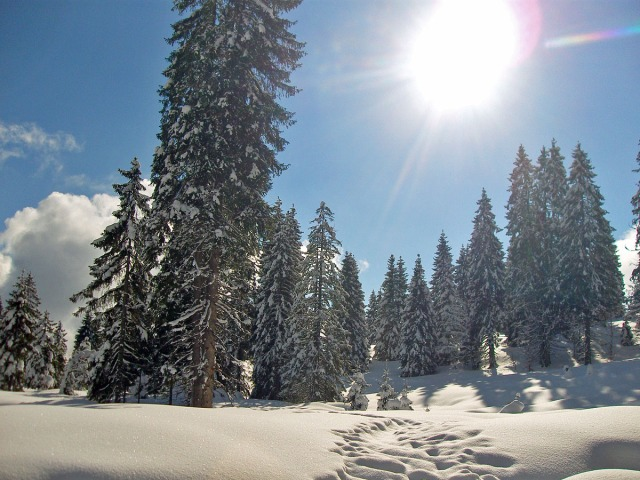 Wintertraum im Schwarzwald