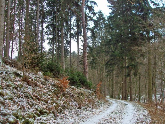 Waldweg im ersten Drittel