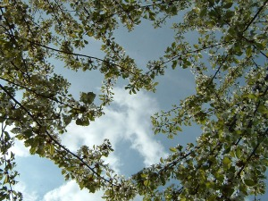 Blüte 2004