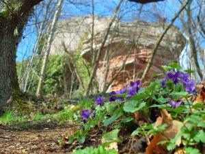 Lila Farbklecks vor der Ruine