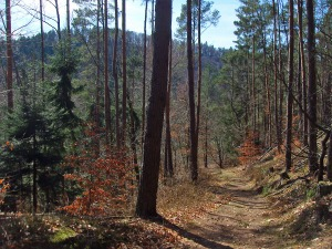 Weg von der Falkenburg ins Tal