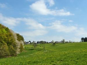 Kühe auf den sattgrünen Wiesen