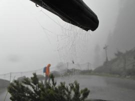 Regen an Spinnennetz