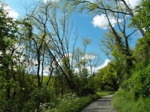 auf dem Weg ins Kasbachtal