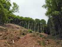 Windbruch oder Forstarbeiten?