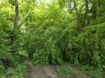 umgestürzte Bäume versperren den Weg