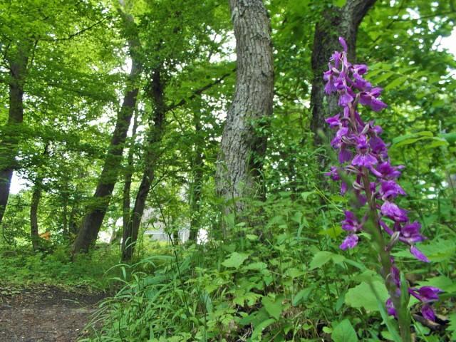 Orchideen am Wegesrand