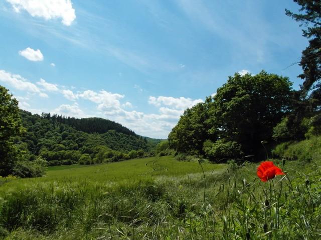 Wiesenlandschaft und Rastplatz
