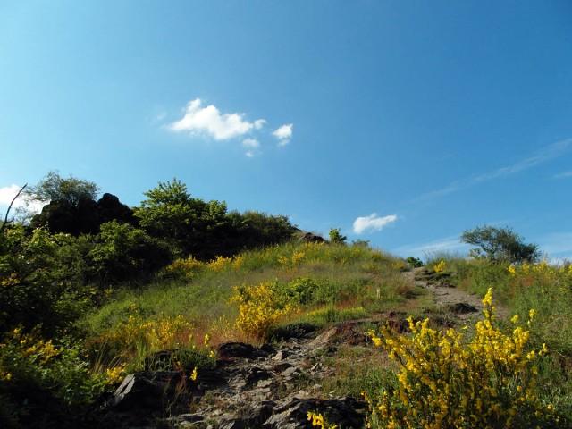Magerwiesen auf dem Mühlenberg