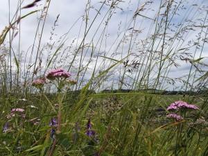 Gräser am Wegesrand