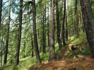 Im Wald - Herrlich