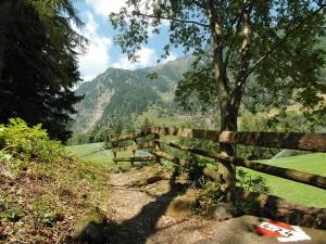 Ein schattiger Weg führt nach Magdfeld