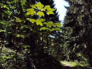 schattiger Wald
