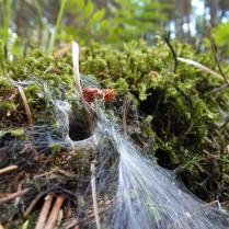 ... oder Spinnweben