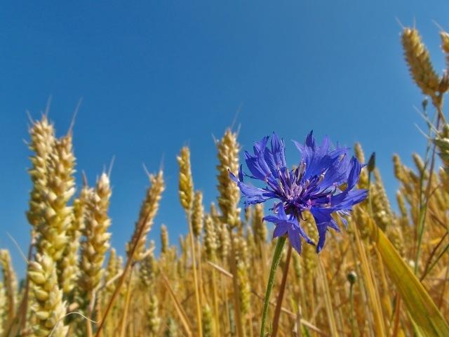 Ein wunderbares blau