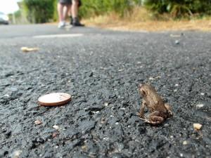 Der Mini-Frosch