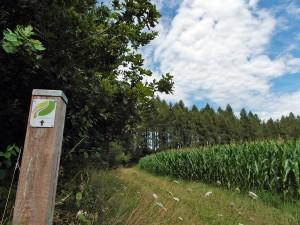 Maisfelder und Wiesenwege