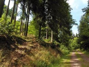 Forstweg zur Straße